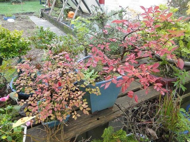 couleurs d'automne 00510