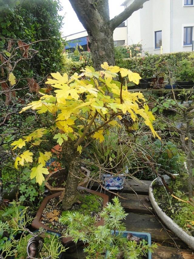 couleurs d'automne 00710