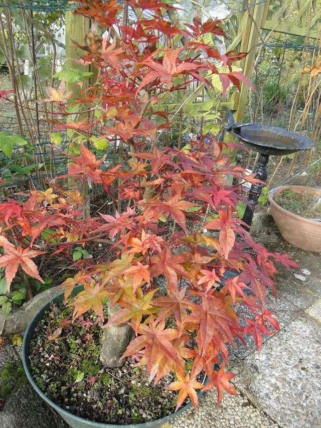 couleurs d'automne 00711