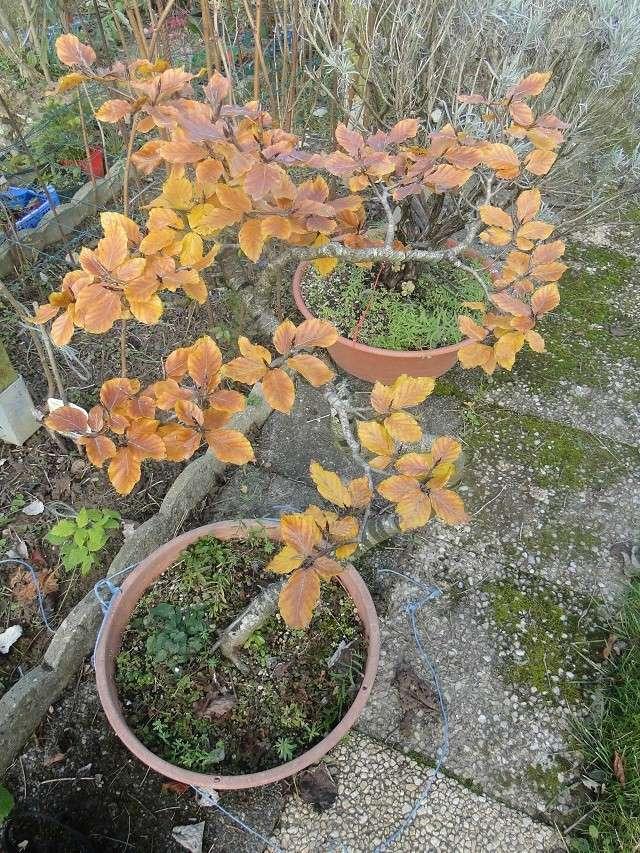 couleurs d'automne 00812