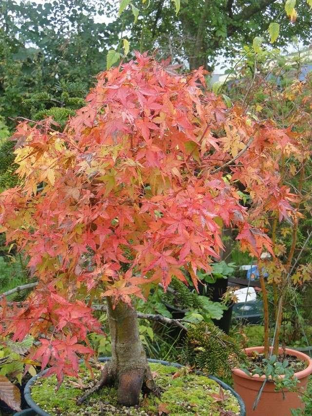 couleurs d'automne 01011