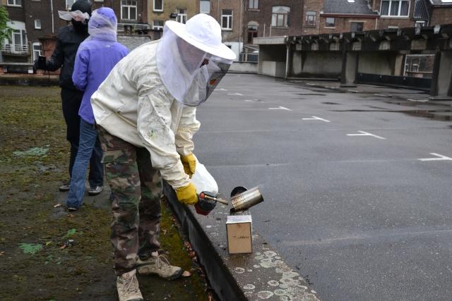 Opération, sauvetage d'abeilles  Dsc_0372