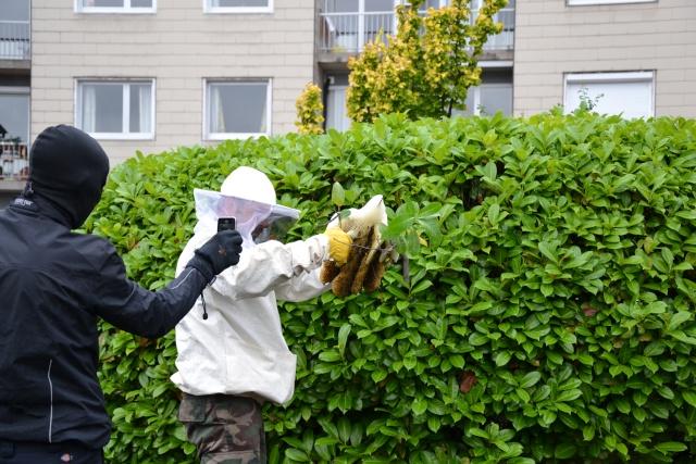 Opération, sauvetage d'abeilles  Dsc_0374