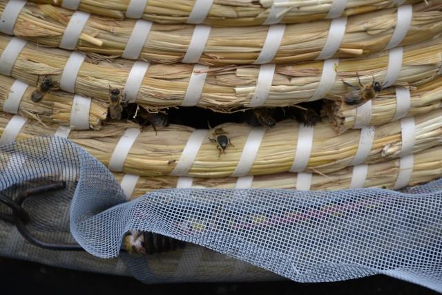 Opération, sauvetage d'abeilles  Dsc_0378
