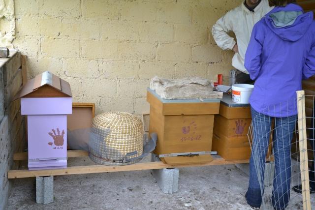 Opération, sauvetage d'abeilles  Dsc_0379