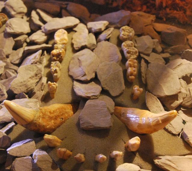 le musée de la grotte Scladina Dsc_1134