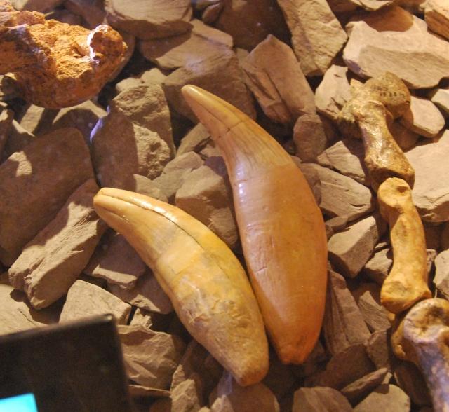 le musée de la grotte Scladina Dsc_1212