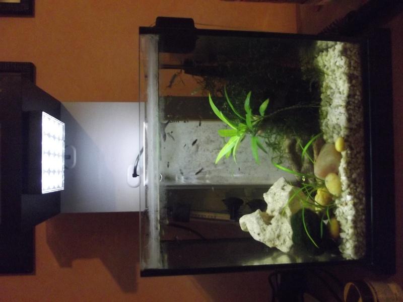 Mon Nano 15L crevettes et bb guppy Dscf1413