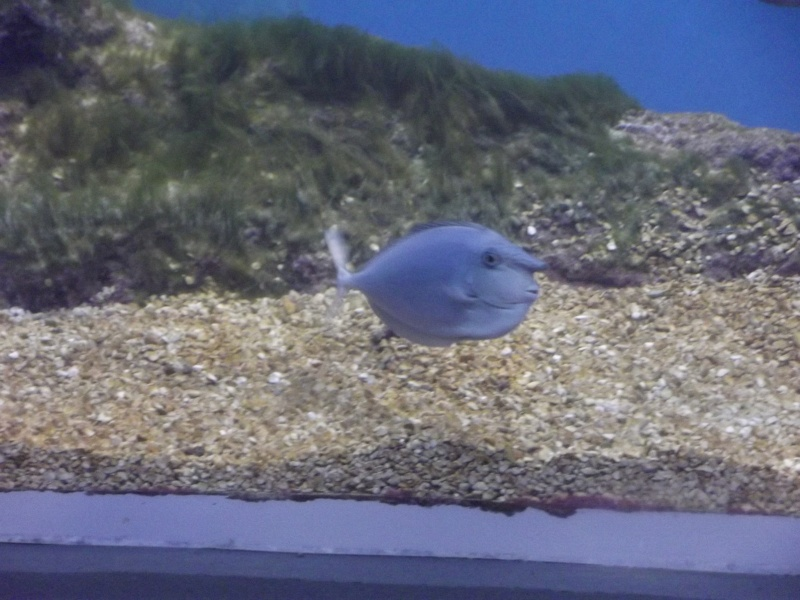 visite de l'aquarium de lyon Dscf1415