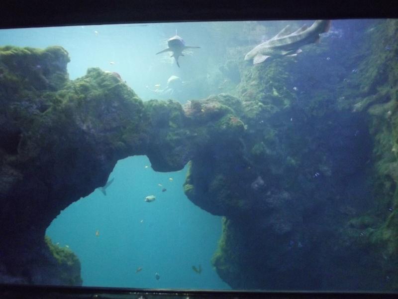 visite de l'aquarium de lyon Dscf1416