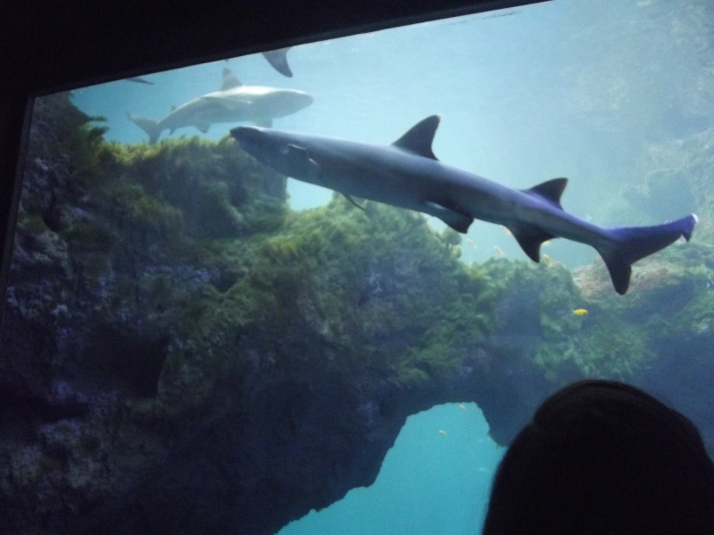 visite de l'aquarium de lyon Dscf1417