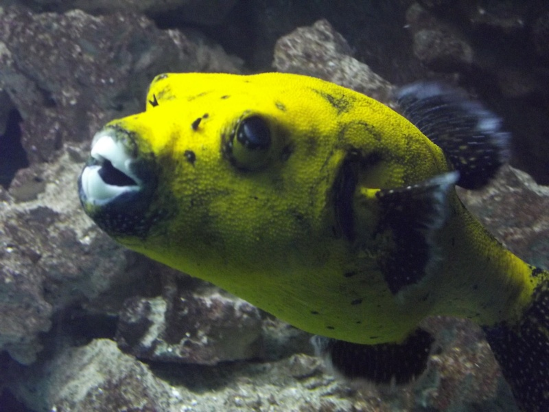visite de l'aquarium de lyon Dscf1510