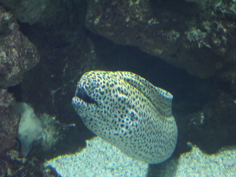 visite de l'aquarium de lyon Dscf1511