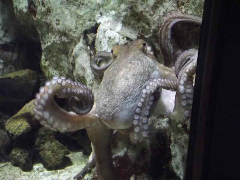 visite de l'aquarium de lyon Dscf1512