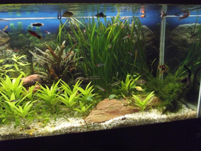 mon 250l pour petit poisson Dscf1618