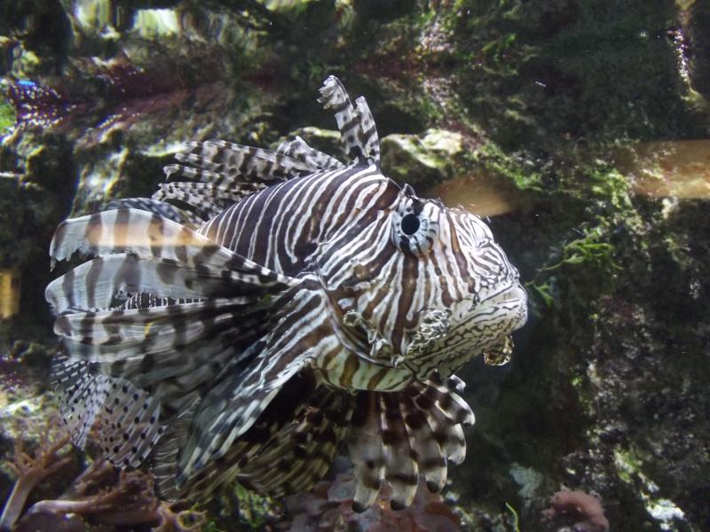visite de l'aquarium de lyon Dscf1624