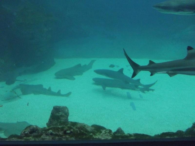 visite de l'aquarium de lyon Dscf1625