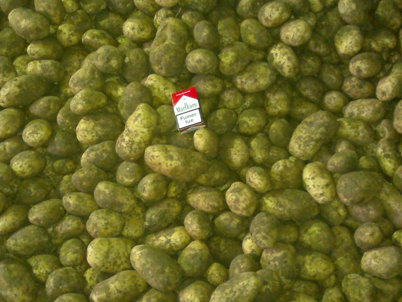 photo stockage pdt  Pommes14