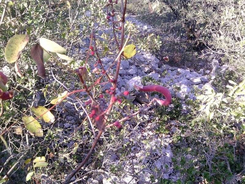 plante bizarre P0210113