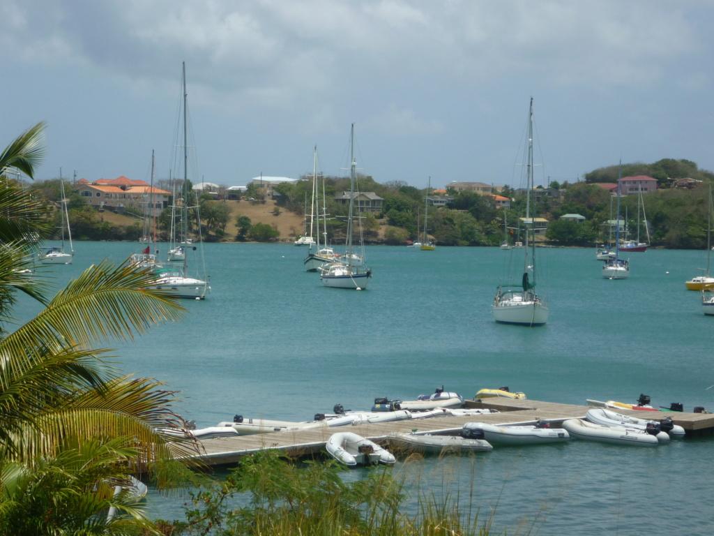 Périgrinations aux Caraïbes et en Atlantique P1030715