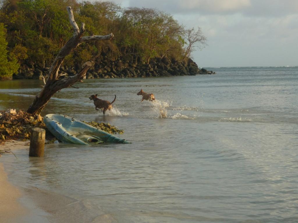 Périgrinations aux Caraïbes et en Atlantique P1030723