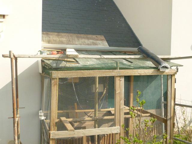 Présentation de l'habitat de mes pensionnaires P1000412
