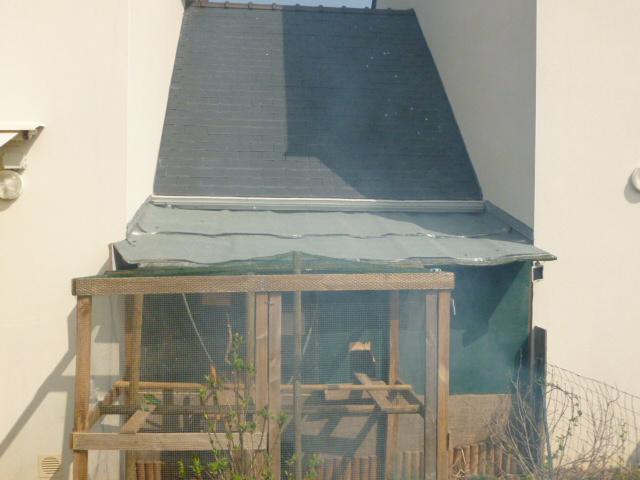 Présentation de l'habitat de mes pensionnaires P1000419