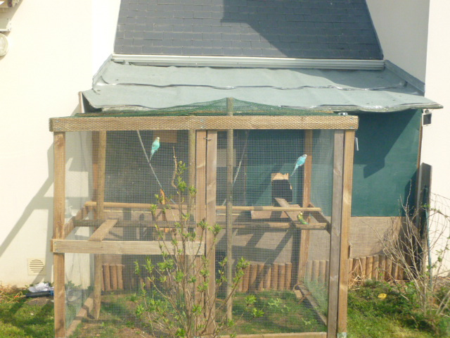 Présentation de l'habitat de mes pensionnaires P1000422
