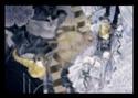 Vos plus belles images de Pandora Hearts 064-0612