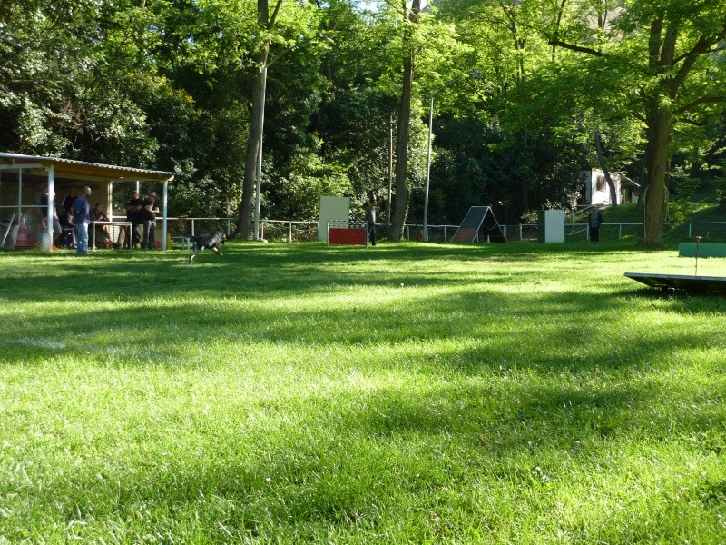photos du concours du club PARTIE I P1020111