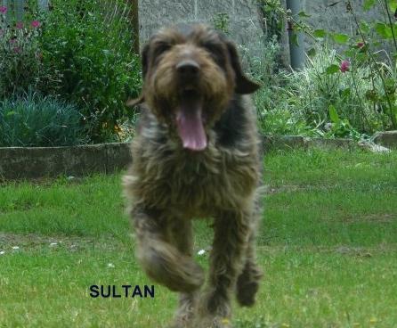 SOS  pour SULTAN dans le calvados bientôt 11 ans ne supporte plus le box !!! Sultan11