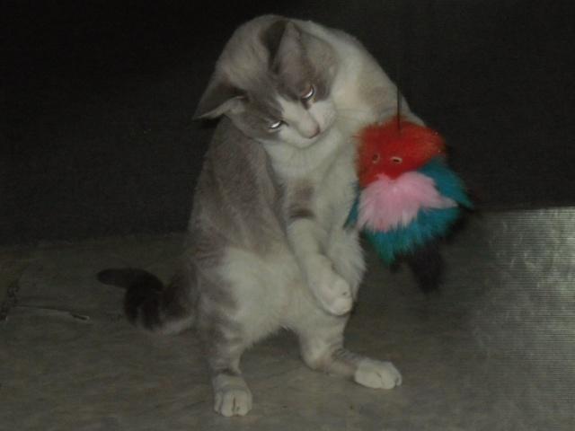 mon chat miaule  Sdc10115