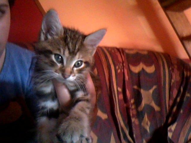 Voici Milouze dit Mimi !!! Snapsh10