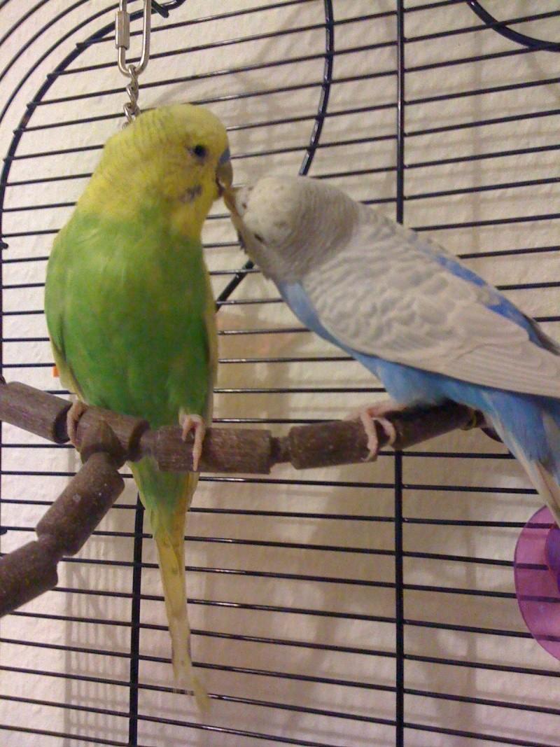 Toupie et blue Photo10