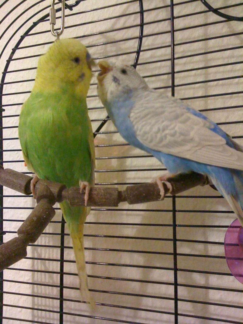 Toupie et blue Photo_10