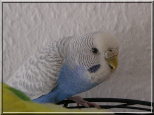 Toupie et blue Pict0113
