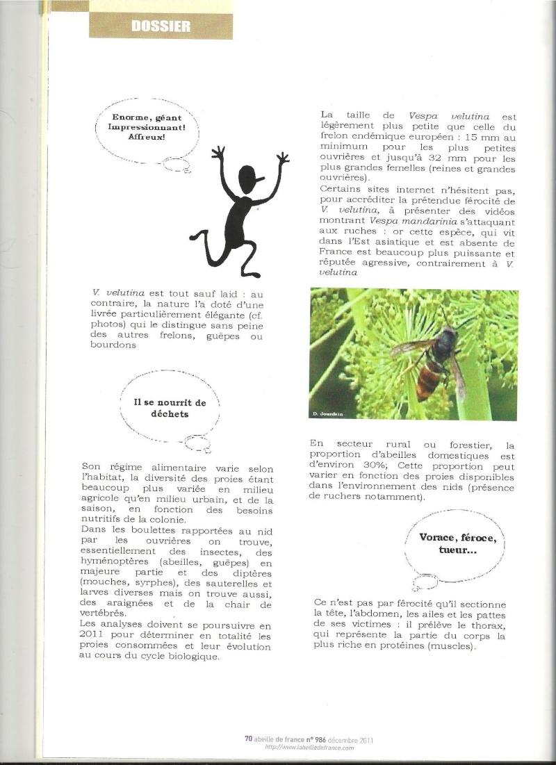 faire le tri dans les informations sur Vespa velutina nigrithorax. Frelon11