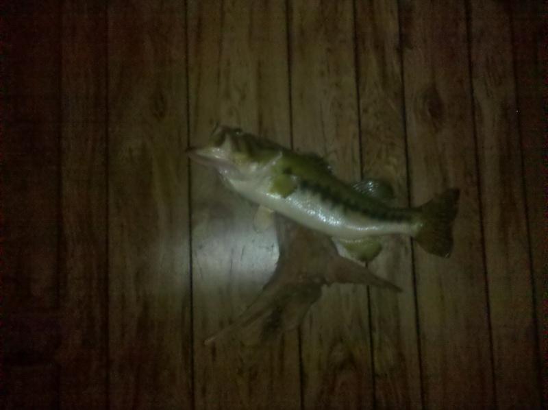 Fish.      Img_2011