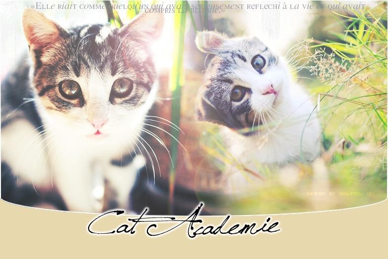 #- Cat Academie.