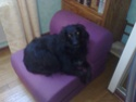 nos animaux familiers 07022012