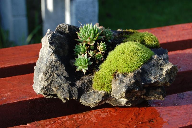 Kusamono Rock Plantings Dsc_0112