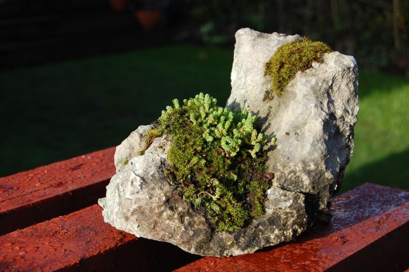 Kusamono Rock Plantings Dsc_0113