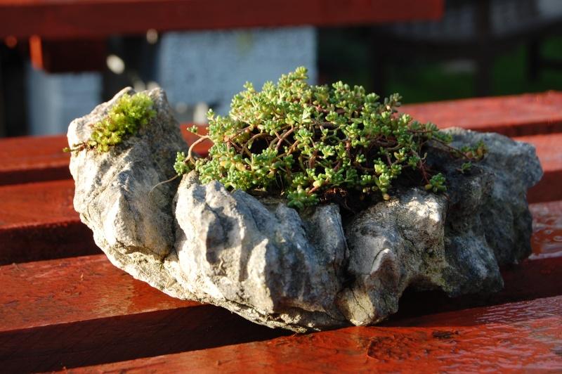 Kusamono Rock Plantings Dsc_0114