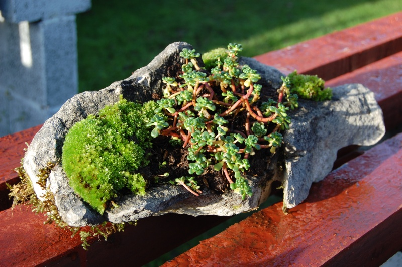 Kusamono Rock Plantings Dsc_0116