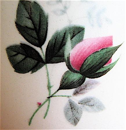 No Name Rosebud on Forma cup Img_1425
