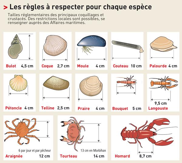 Taille minimale des poissons  Pechep10