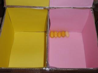 Preparando las cajas para los huevos de este año P5144212