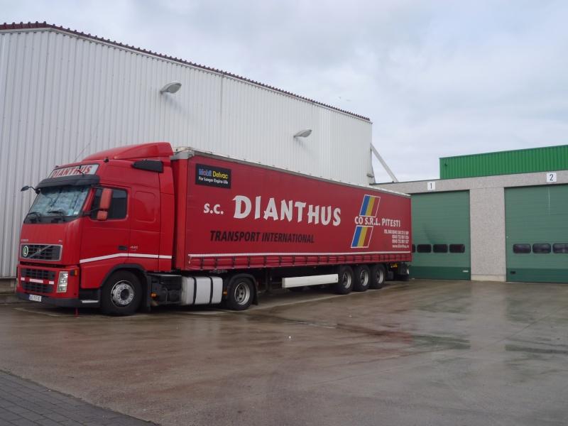 Dianthus 01127