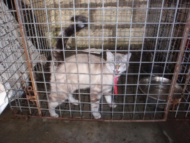 Photos des chats sauvés, avant/après Chatco10