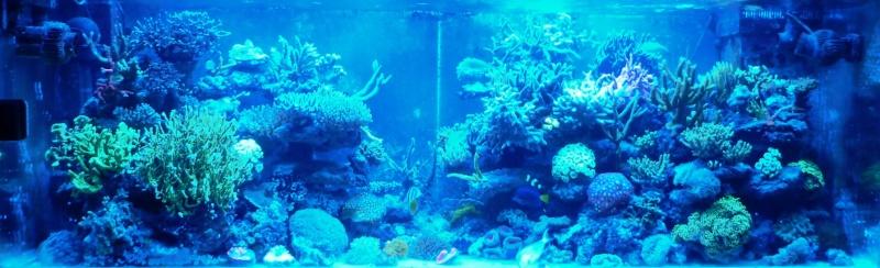 Navarchus Reef Tank Evolution - Page 5 P1000129